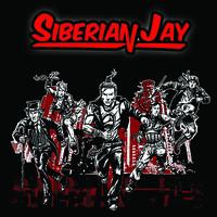 Siberian Jay: Siberian Jay