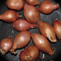 Segall, Ty: Fried Shallots