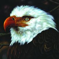 Mogwai: Hawk is howling