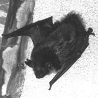True Werwolf: Vampyr Strigoi & Rituals