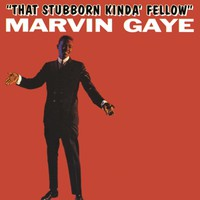 Gaye, Marvin: That stubborn kinda..
